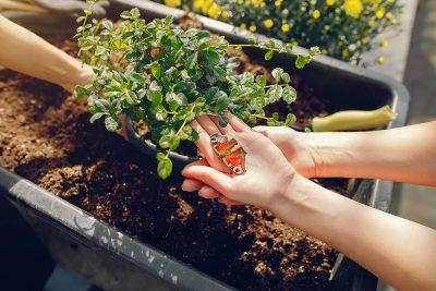 Blumen und Gartenpflege